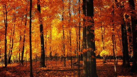 Aesthetic Fall Themed Desktop Backgrounds by Paysage D Automne