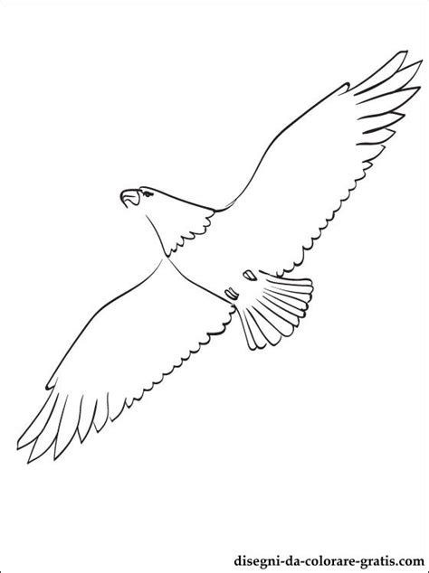 Aquila disegni da colorare Disegni da colorare gratis