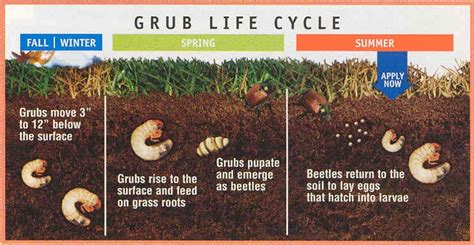 How to Detect & Control Grubs in the Lawn This Summer