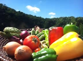 夏野菜 に対する画像結果