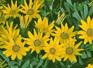 Plantes Et Fleurs Pour Balcon : choisir les fleurs pour jardini re d 39 t au soleil ~ Premium-room.com Idées de Décoration