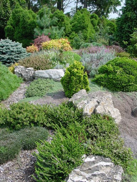 rock gardens ground covers images  pinterest