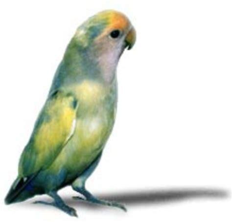 Love Birds Exotic Pets