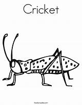 Cricket Coloring Worksheet Crickets Insect Pages Twisty Tracing Grillos Animal Noodle Twistynoodle Outline Bug Printable Insects Sheet Learning Built California sketch template