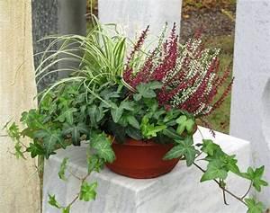 Winterpflanzen Für Balkonkästen : kleine bepflanzte hebstzauberschale ~ Indierocktalk.com Haus und Dekorationen