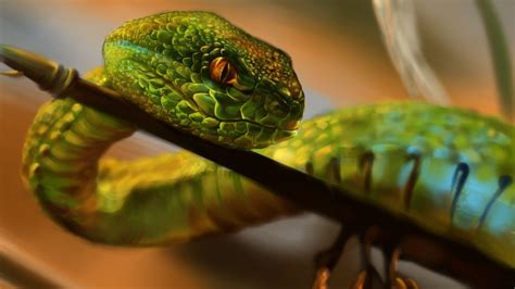 wallpaper snake green reptile eyes art animals