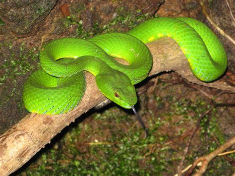 amazonjunglerainforestanimals pictures  animals