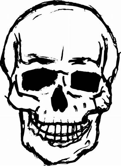 Skull Drawing Transparent Svg Skeleton Vector Clipart