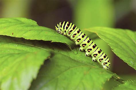 my flowers garden caterpillars now what