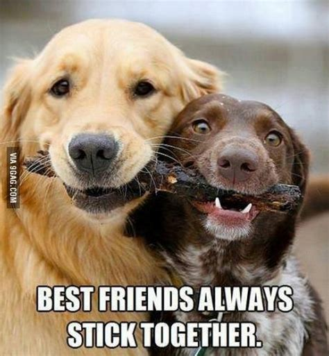 best friends funniest pictures with captions
