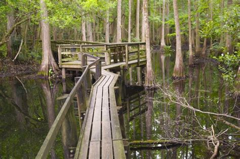 hammocks state park highlands hammock state park a florida park located