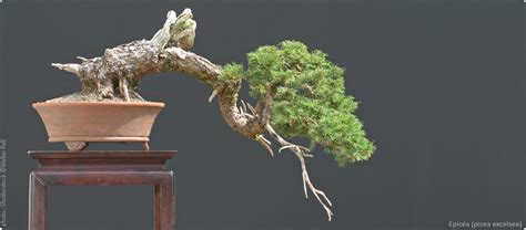pot bonsai pas cher bonsai ka vente de bonsa 239 outils poteries et accessoires bonsai ka