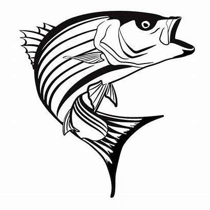 Bass Fish Striper Coloring Clipart Pages Striped