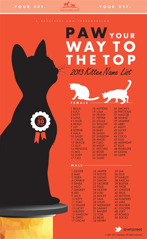 names for cats most popular kitten names of 2013