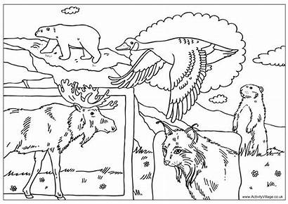 Canada Colouring Pages Coloring Printables Crafts July