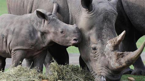 Reportaje  Uicn Lista Roja De Animales En Extinción 2017