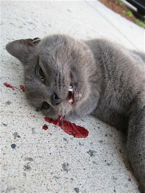 Dead Cat Everett Ma  Flickr  Photo Sharing