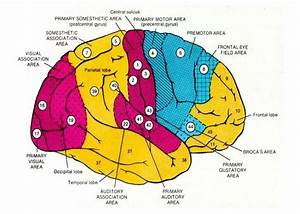 Neurology of Sensory Integration