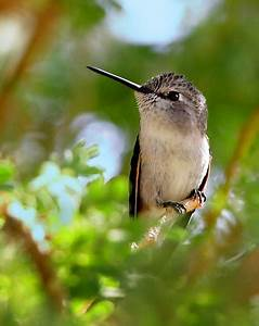 720 best images about ~*~ Photography ~ Hummingbirds on ...