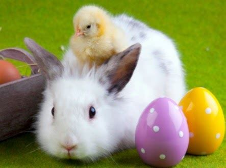 easter bunny chick easter wallpapers