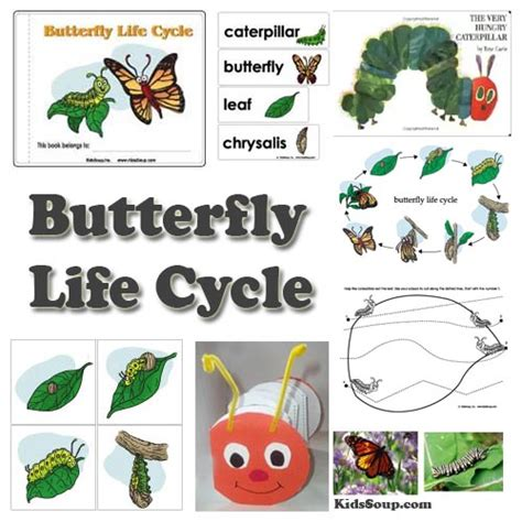 butterfly life cycle for preschool preschool butterfly and caterpillar activities and 818