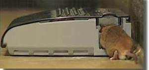Comment Tuer Un Rat : comment tuer un rat dans une maison taupier sur la france ~ Mglfilm.com Idées de Décoration
