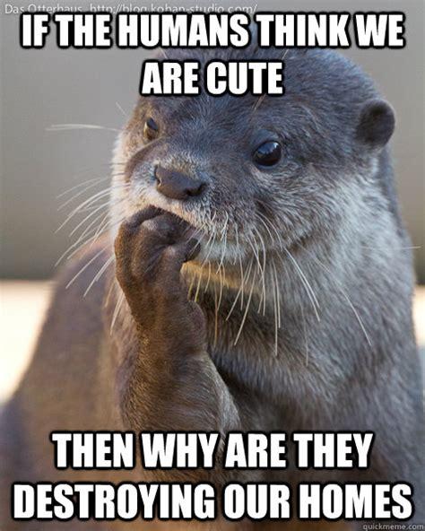 Funny Otter Meme - otter meme memes