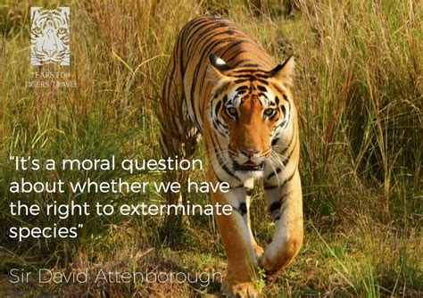 favourite sir david attenborough quotes tears  tigers