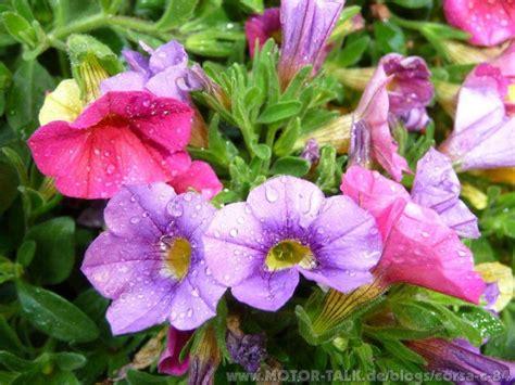 Blumen Im Garten  Städtereisen  Corsac84 #203824739