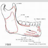 mandible-anatomy