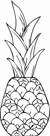 Pineapple Drawing Coloring Exotic Cayenne Clip Line Smooth Pages Print Easy Getdrawings sketch template