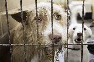 spaying, neutering benefits dogs and improves their health