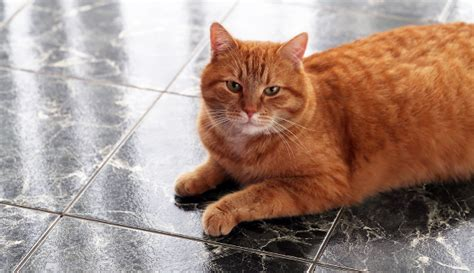 are you allergic to your cat here s what to do catster