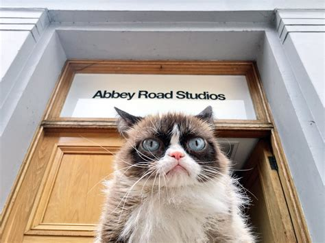 Grumpy Cat takes in the sights of London but ...