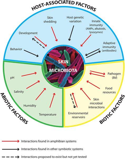 Biotic And Abiotic Factors Diagram