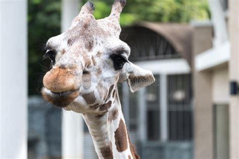 giraffe image  neck  head munching  green stork