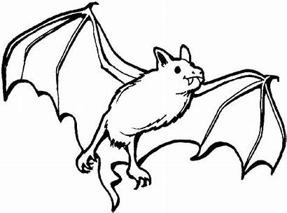 Coloring Pages Bats Animals Nocturnal Flying Sheets