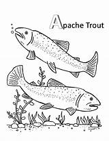 Trout Coloring Pages Apache Mating sketch template