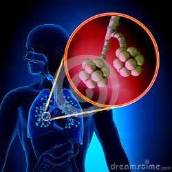 Human Anatomy Respiratory System