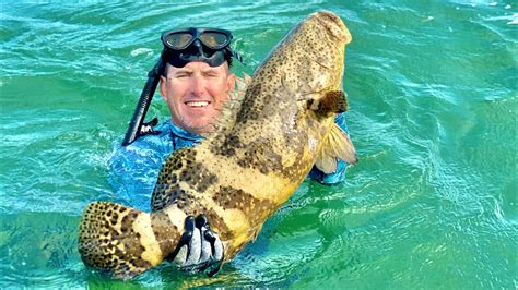 goliath grouper catch cook