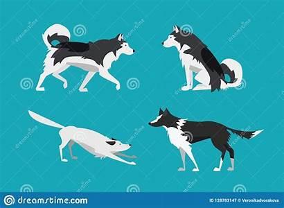 Collie Border Malamute Flat Alaskan Dogs Illustratie