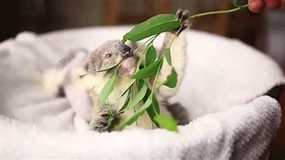 Koala Poses Adorable Hug Photoshoot Imogen Reblog