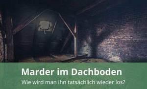 Marder Unter Dem Dach : marder im haus hilfe durch marderschutz und marderabwehr ~ Frokenaadalensverden.com Haus und Dekorationen