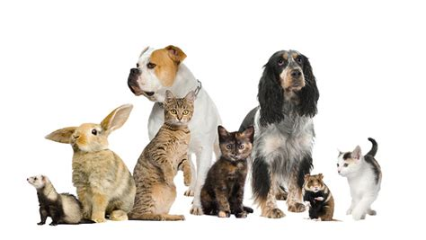 responsible pet ownership month oshawa harmony valley dog park
