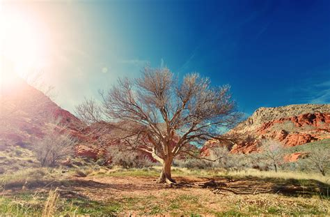 wallpaper dry tree desert sunlight   nature