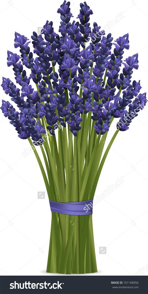 lavender bunch clipart   cliparts  images