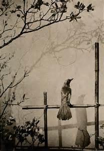Frank Y. Sato C.1925 Shadow From Garden