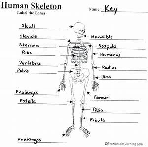 Blank Bone Diagram  U2013 Rightarrow Template Database
