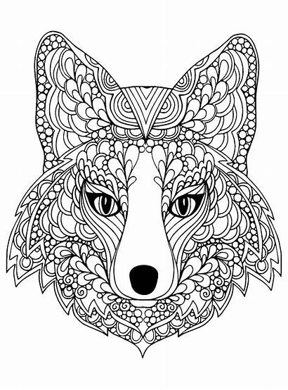Fox Head Coloring Foxes Beutiful Pages Adult