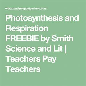 Photosynthesis And Respiration Freebie